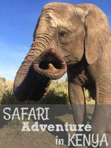 Safari Adventure in Kenya