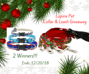 Lupine Pet Collar and Leash